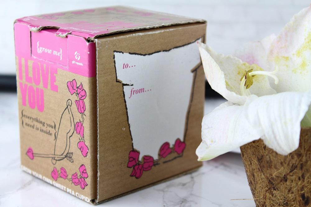 Valentinsschatz - Geschenkideen für den Liebsten - Radbag Pflanze Valentinstag