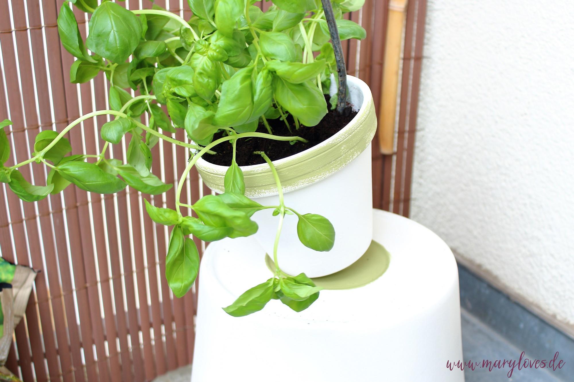 Kräuter in die einzelnen Töpfe bepflanzen oder aussäen