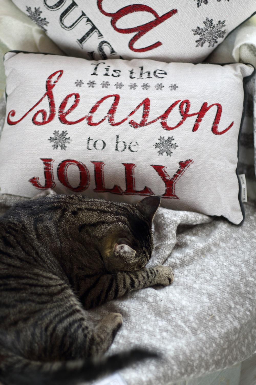 [Anzeige] Die passende Weihnachtsdekoration für gemütliche Adventsstimmung - Weihnachtskissen mit Katze