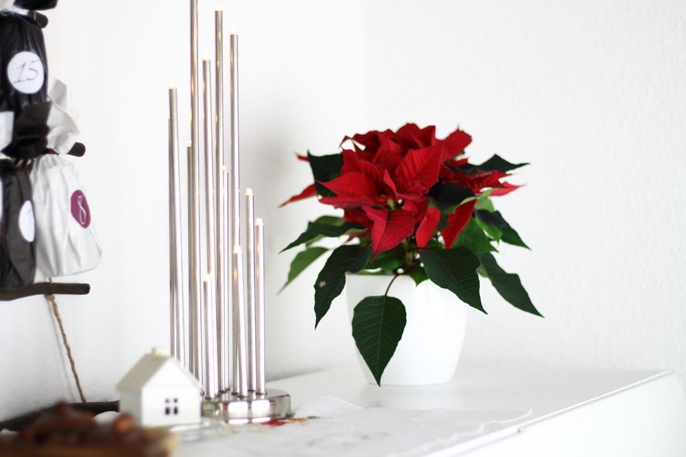 [Anzeige] Die passende Weihnachtsdekoration für gemütliche Adventsstimmung - Weihnachtslichter & Weihnachtsstern