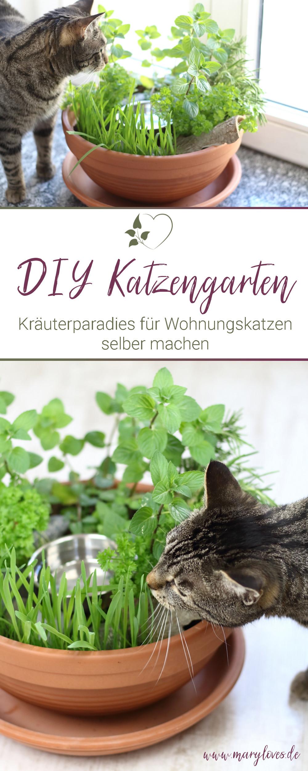 [Anzeige] DIY-Katzengarten für Wohnungskatzen gestalten & bepflanzen - #katze #katzengarten #diykatzengarten #katzendiy #kräutergarten #katzenkräuter