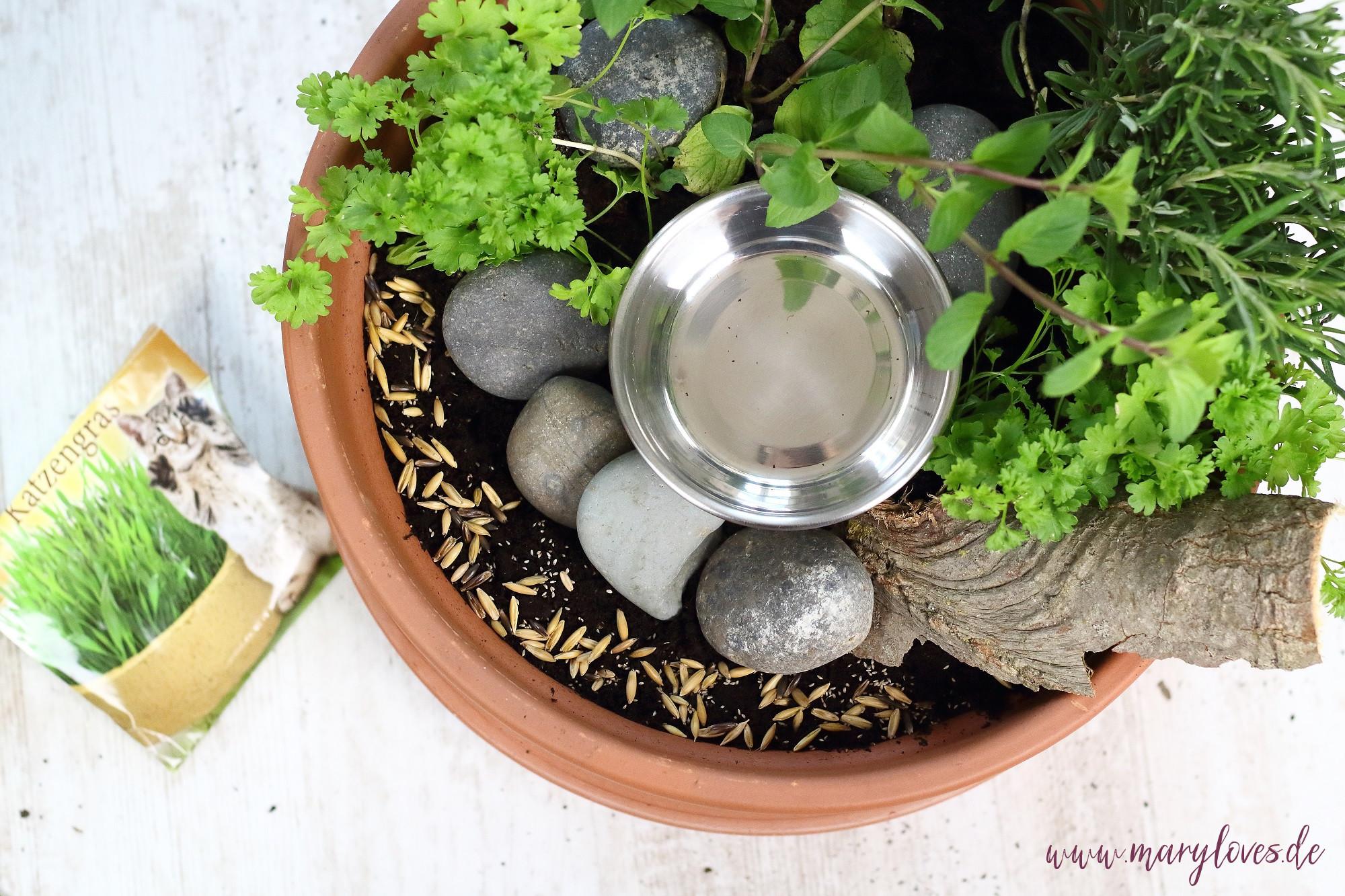 Anleitung zum selbstgebauten Katzenkräutergarten