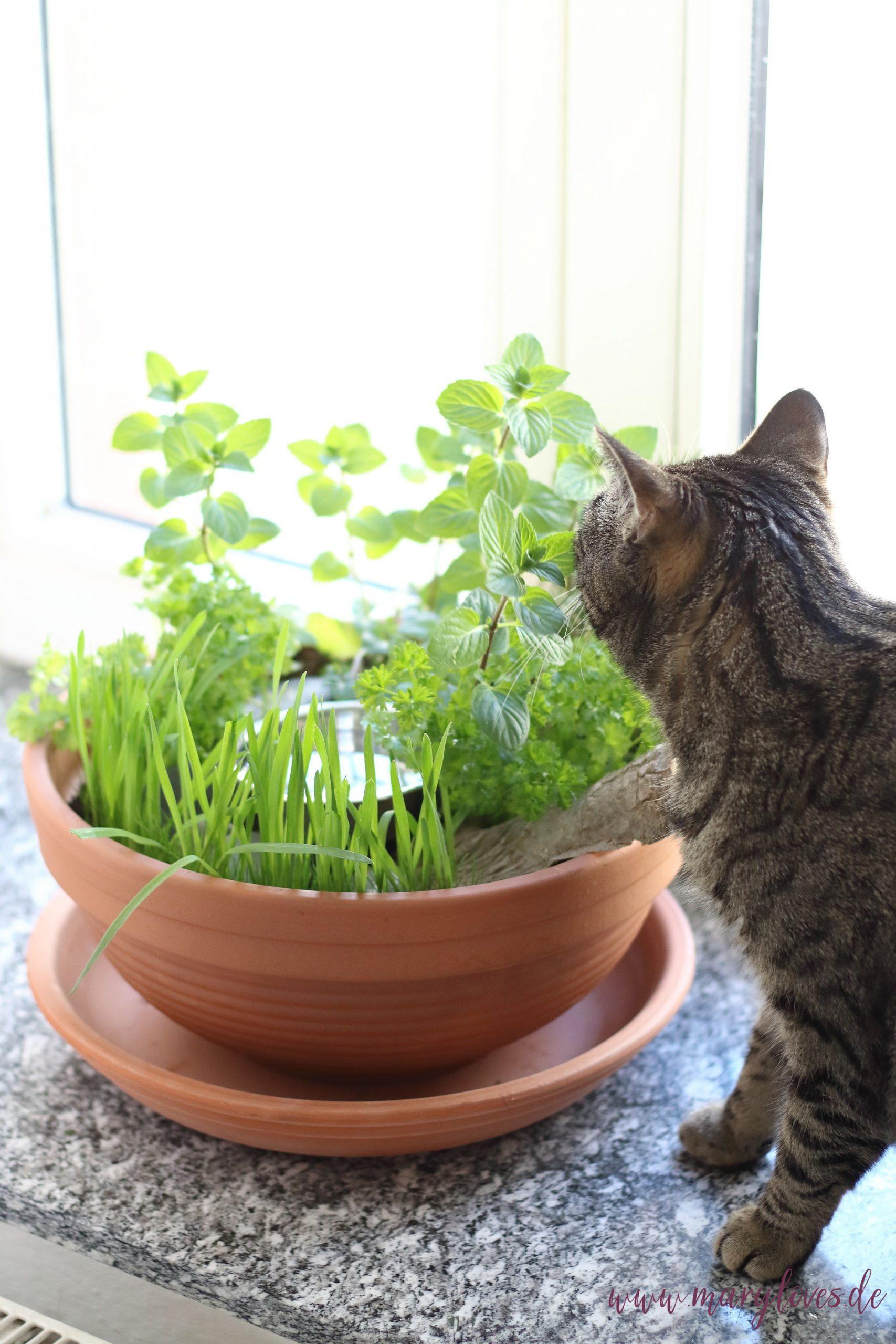 DIY-Katzengarten für Wohnungskatzen gestalten & bepflanzen