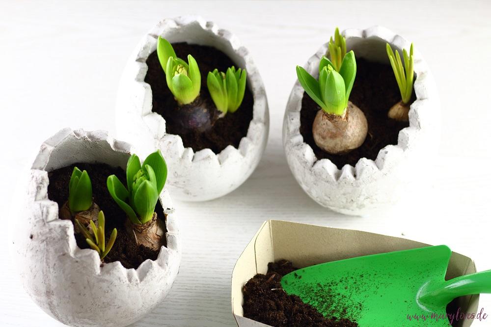 Frühlingsblumenzwiebeln in Zement-Eierschalen einpflanzen