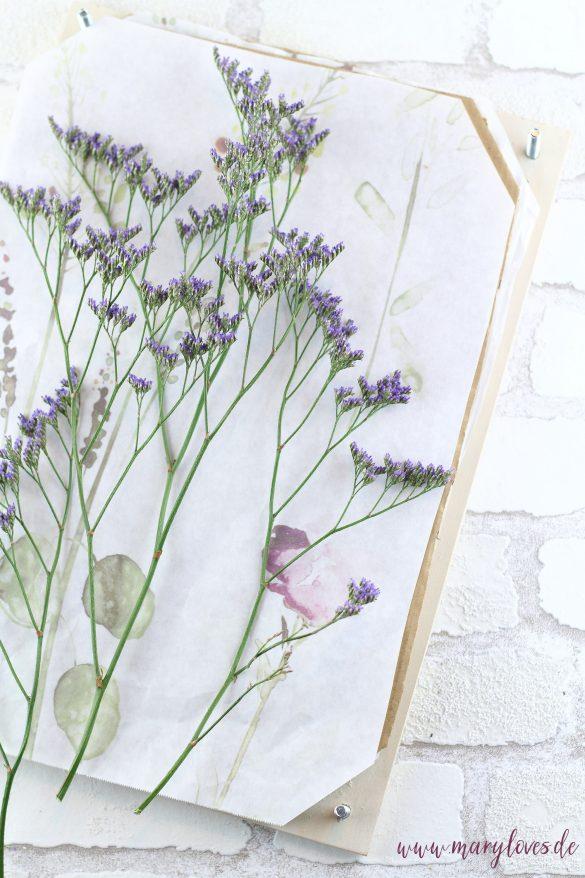 Blumen zum pressen zwischen das Papier legen