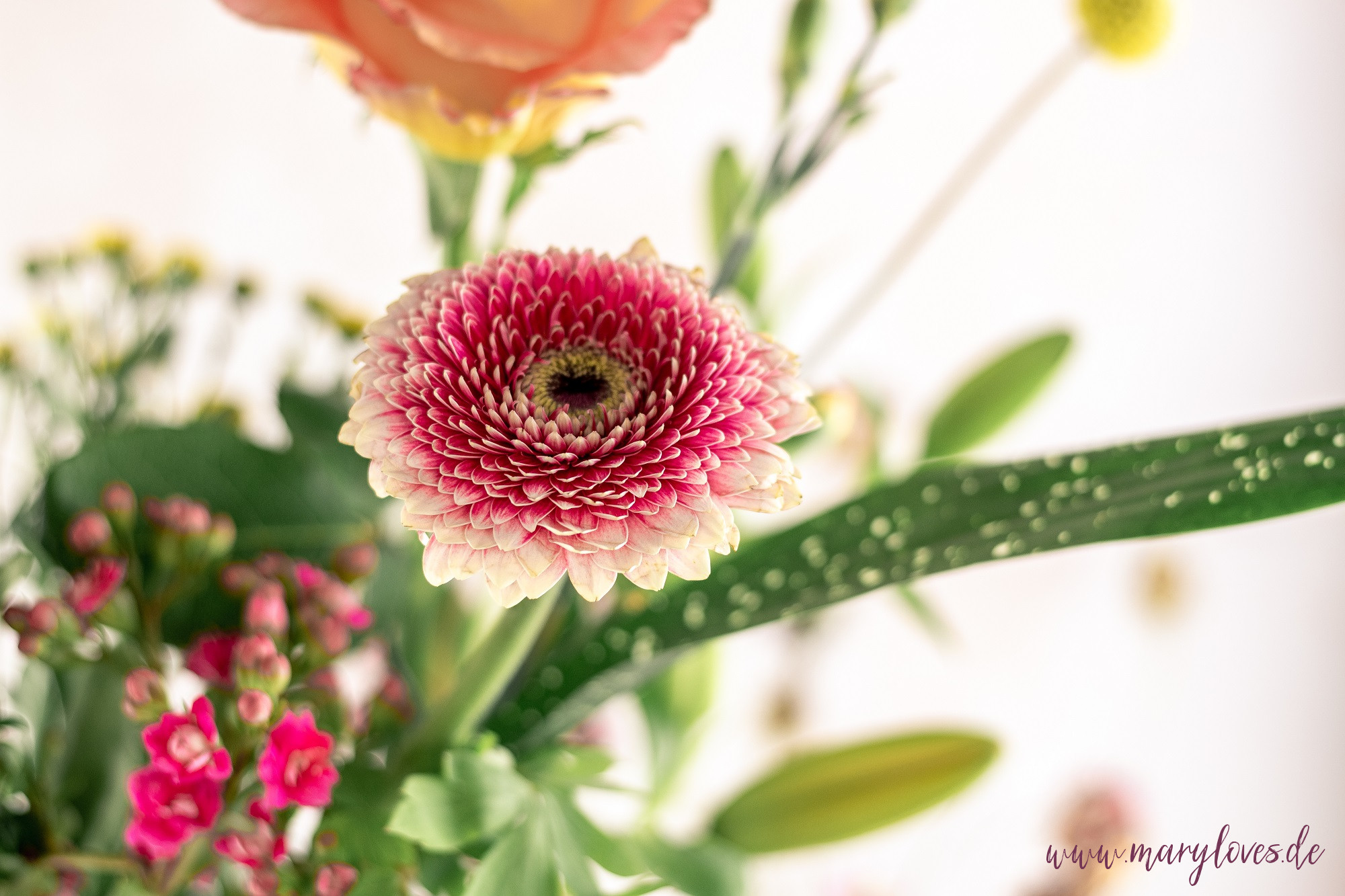 Blumen von bloomon zum Muttertag